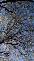 cropped-dsc01866.jpg